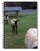 Sheep Feed Time Spiral Notebook