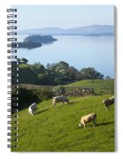 Sheep Grazing By Lough Corrib Cong Spiral Notebook