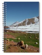 Sheep In The Atlas Mountains 02 Spiral Notebook
