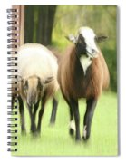 Sheep On The Run Spiral Notebook