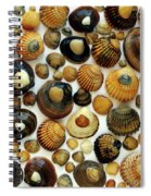 Shell Background Spiral Notebook