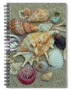 Shell Collection 2 Spiral Notebook