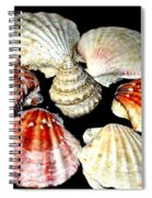 Shell Flower Spiral Notebook