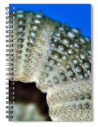 Shell With Pimples 2 Spiral Notebook