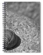 Shells IIi Spiral Notebook