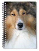 Sheltie Spiral Notebook