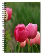 Sherbert Color Tulips Spiral Notebook