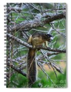Shermans Fox Squirrel Spiral Notebook