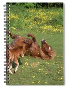 Shetland Pony And Foal Playing Spiral Notebook