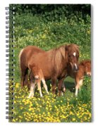 Shetland Pony With Foal Twins Spiral Notebook
