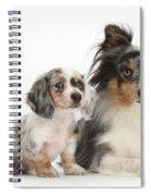 Shetland Sheepdog And Dachshund Puppy Spiral Notebook