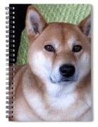 Shiba Inu Kobi-3 Spiral Notebook