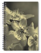 Shimmering Callery Pear Blossoms Spiral Notebook