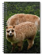Short And Tall Spiral Notebook