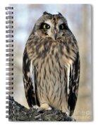 Short-eared Owl Spiral Notebook