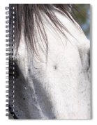 Show Horse At Mule Days Spiral Notebook