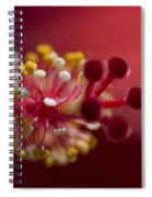 Showy Tropical Vibrant Red Hibiscus Pistil Spiral Notebook
