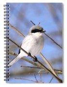 Shrike - Bird - Unique Beak Spiral Notebook