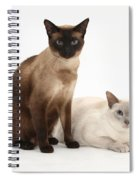 Siamese Cats Spiral Notebook