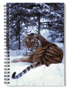Siberian Tiger Lying On Mound Of Snow Spiral Notebook
