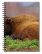 Siesta Spiral Notebook