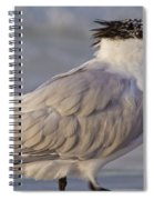 Siesta Key Royal Tern Spiral Notebook