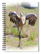 Silly Sandhill Crane Chick Spiral Notebook