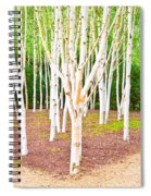 Silver Birch Trees Spiral Notebook