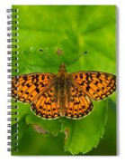 Silver-bordered Fritillary Spiral Notebook