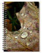 Silver Maple Rain Spiral Notebook
