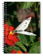 Silver Moth Spiral Notebook