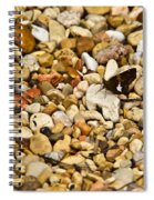 Silver Spotted Skipper 1 Spiral Notebook