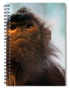 Silvered Langur Spiral Notebook