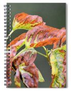 Simply Autumn Spiral Notebook