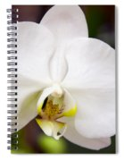 Simply Pure Orchid Spiral Notebook