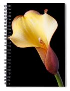 Single Calla Liliy Spiral Notebook