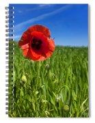 Single Poppy Flower  In A Field Of Wheat Spiral Notebook