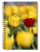Single Red Tulip Among Yellow Tulips Spiral Notebook