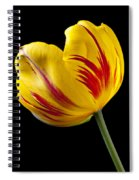 Single Yellow And Red Tulip Spiral Notebook