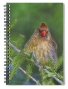 Sitting In The Cedar Spiral Notebook
