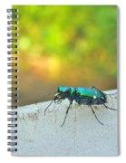 Six-spotted Tiger Beetle - Cicindela Sexguttata Spiral Notebook