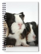 Six Young Guinea Pigs In A Row Spiral Notebook