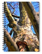 Sky Is The Limit Not Age  Spiral Notebook