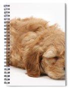 Sleeping Cockerpoo Puppy Spiral Notebook