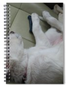 Sleeping In The Front Seat Spiral Notebook