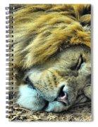 Sleeping Lion Spiral Notebook