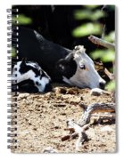 Sleepy Arizona Cows Spiral Notebook