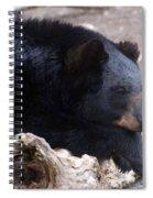 Sleepy Black Bear Spiral Notebook