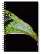 Small Green Fly 2 Spiral Notebook