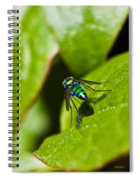 Small Green Fly Spiral Notebook